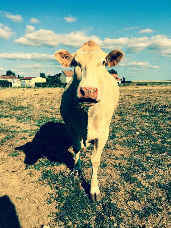 Description de la photo. Photo d'une vache dans un pré. Elle a de l'herbe dans la gueule. Quelques maisons en arrière plan, le ciel est bleu avec quelques nuages. Fin de la description de la photo.